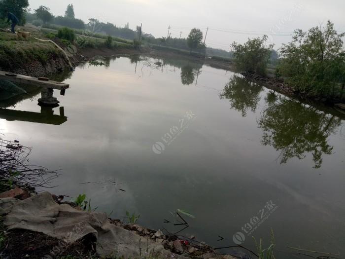 农村野生鱼钓场