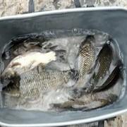 钓鱼人必须遵守的江湖规则