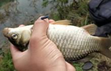 掌握鱼儿的这些习性,作钓方能百战不殆!