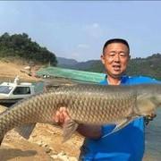 野釣需要逆向思維 反其道而行之 湍急河流釣大魚技巧分享