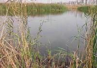 野河釣魚遇到水草多時該這樣解決!