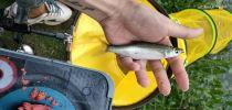 我就只想钓个鱼怎么就那么难啊?