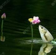 探讨,为什么打完窝子,鱼儿还不咬钩?原来是跟竿长短有关系。