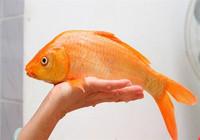 钓了半辈子鲤鱼  今日终于搞通这套鲤鱼钓法!