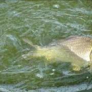 宅在家里为防控、浅谈遛鱼小技巧。