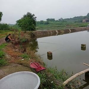 金龙钓鱼场
