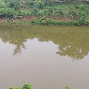 泸州双加镇鱼塘天气预报