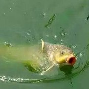 【学钓技】春季手竿钓鲤鱼,牢记这三大套路,钓鲤鱼不是难事!