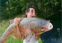 爱吃鱼头总钓鲢鳙 夏钓鲢鳙就该这么用饵