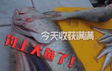 《全球釣魚集錦》 第一次出海挑戰釣鯊魚,結果意外破我20年的釣魚記錄!