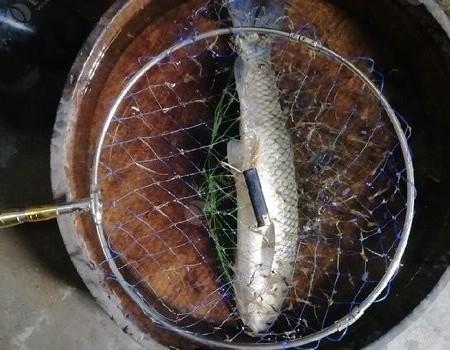 白坑一小時上了個草魚