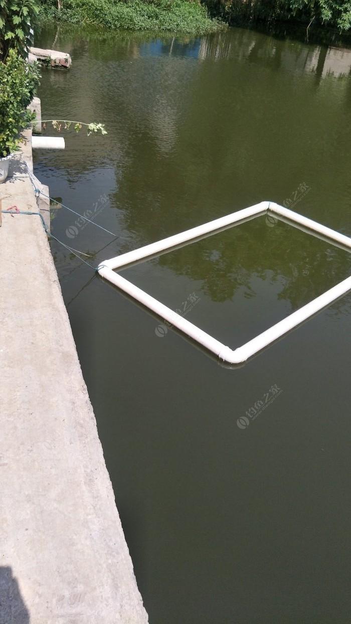 自家小鱼塘