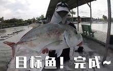 《全球釣魚集錦》在咸水釣魚場釣到金骨魚,是我最喜歡挑戰的魚之一!