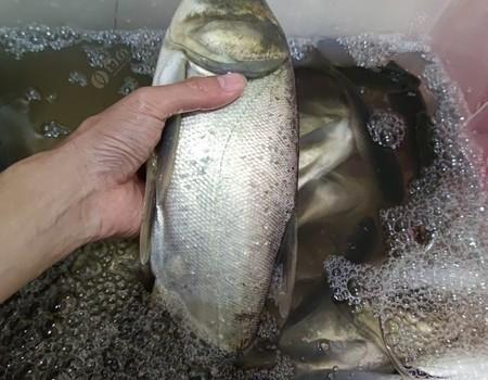 抓住秋天的尾巴,狂擼大頭魚
