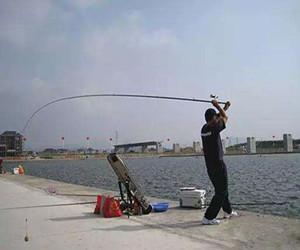 夏钓草鱼抛杆最好用 这些技巧你真的学会了吗?