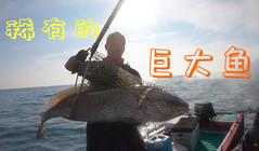 《全球钓鱼集锦》捕捉到珍贵的稀有画面,终于钓到了超巨大的名贵鱼!