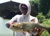 《户外老曹》钓鱼实战 7斤的深水鲢鳙 多久才能溜上来?