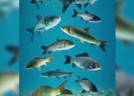 《钓鱼百科》第136集 什么是泳层?