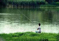夏季清晨釣魚,釣位和餌料的選擇技巧