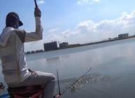 《麦子钓鱼》这平底水库的鱼情也太给力,接连上鱼还不停双飞