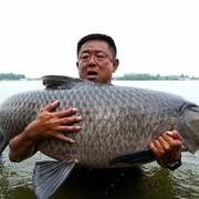 """要想钓""""巨物"""",掌握以下5个要领,99%中鱼!"""