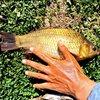爱钓鱼学生物的大学生小代