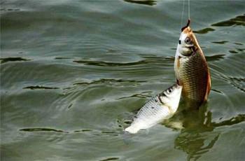 一个鱼获满满的春钓,要从这三点开始!