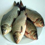 手作的一些点鲫鱼鲤鱼的芦苇浮漂