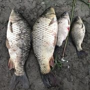 關于溫榆河垂釣鯉魚的若干經歷、經驗掏心窩兒分享