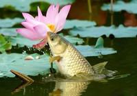 春季釣草,必備的心得技巧!