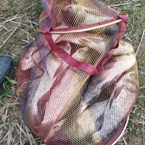 复堆河野生鱼钓场