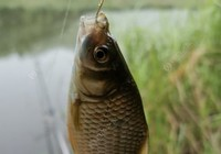 秋季钓鲫鱼与天气的关系浅析
