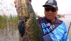 《藍旗魚路亞》三強打黑焦崗湖,這里的黑魚咬蛙很兇殘!