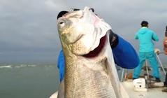 《蓝旗鱼美女丝袜理论福利在线》从天亮开始爆拉大海鲈,大风大雨真的出大鱼!
