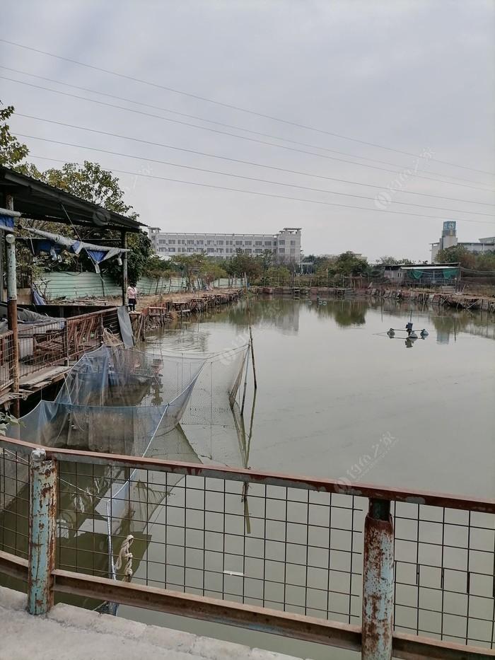 杏坛钓鱼场