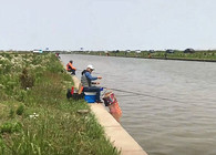 《戶外老曹》實戰:和釣友們一起釣鯔魚,其樂無窮!