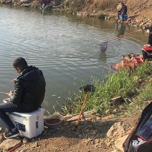 金州老董鱼塘