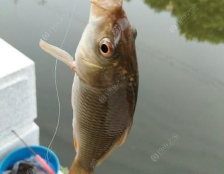 初次探釣民生河,愉悅人心的不止是鯉姐鯽妹~