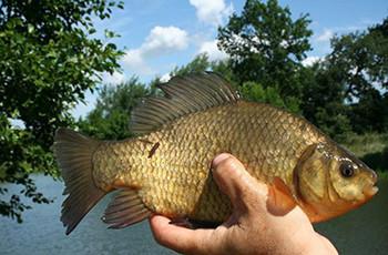 只需兩點技巧,高溫野釣也有好魚獲!