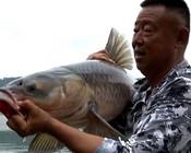 《游钓中国7》第2集 蹲守武功湖数天,巨青连竿一尾又一尾