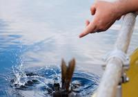 夏季作釣,這幾種天然魚道不可少!
