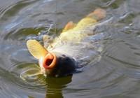 怎么減少切線跑魚