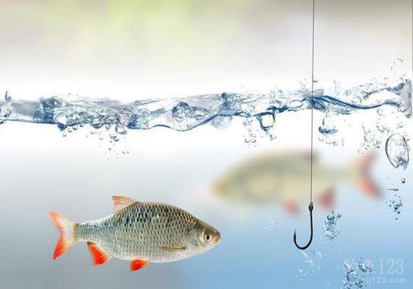 夏季高温钓鱼该如何进行作钓呢?高温有哪些影响