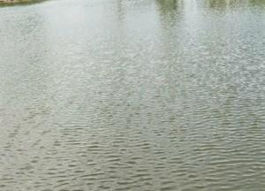 渔乐垂钓园天气预报