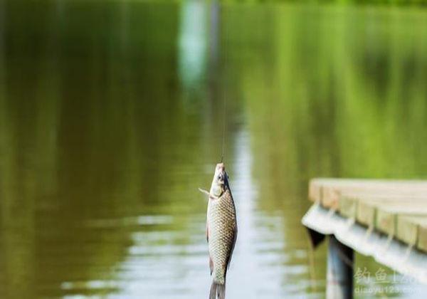夏季渔获少究竟是什么原因,才造成的这种现象呢?
