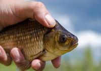 野钓想要上鱼快,钓饵使用有技巧!