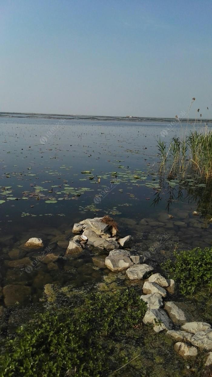 骆马湖凤凰鱼排