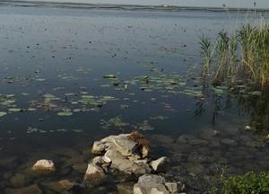 骆马湖凤凰鱼排天气预报