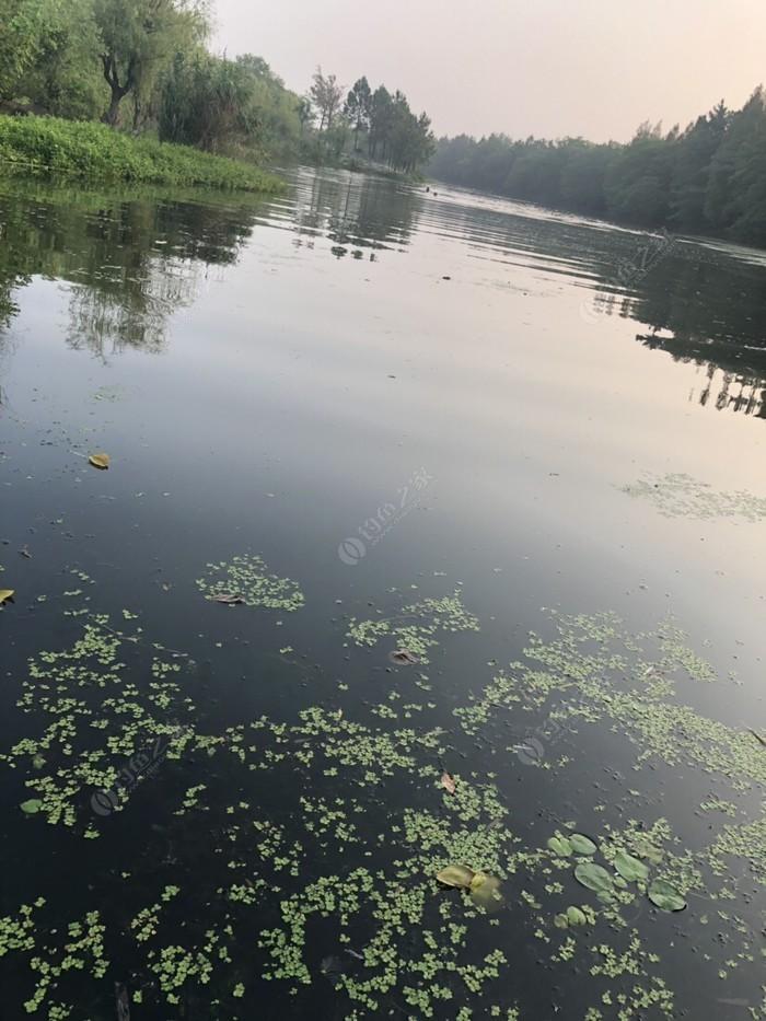 白洋河湿地公园