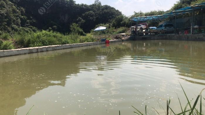 武湖鑫巨龙钓场